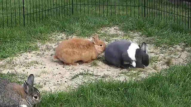 蹦跶得超欢脱的兔子,看起来超开心