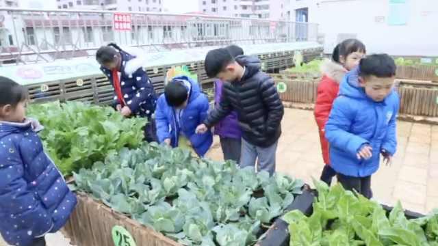 楼顶建开心农场,学生种菜体会艰辛