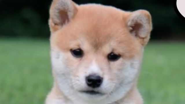 狗狗的成长变化图,你被萌到了吗?