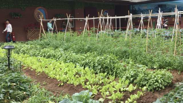 商场中庭建农场,种满10多种蔬菜