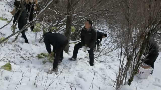人工补食!海拔2千米投食助动物越冬