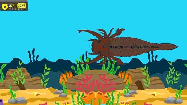 直壳鹦鹉螺的天敌:板足鲎