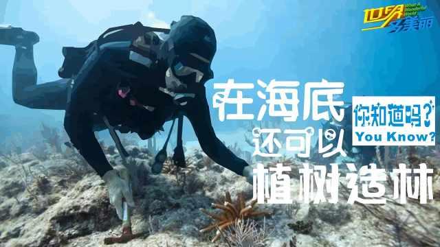 在马尔代夫海底种珊瑚,你种过吗?