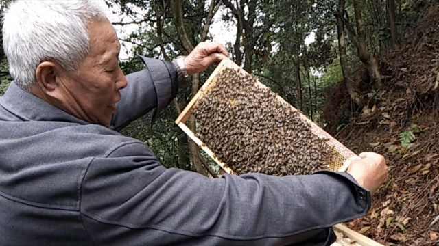 他家祖孙3代养蜂,带领300户人致富