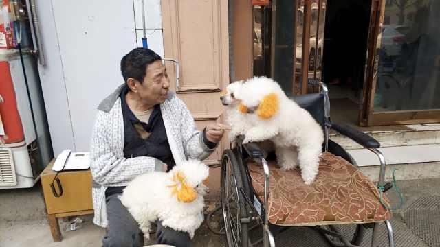 偏瘫老人不愿孩照顾,3狗为伴帮脱衣