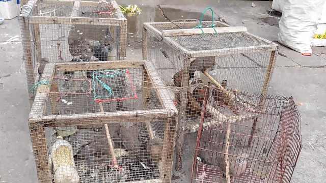 大量野生动物遭售卖,警方查获放生