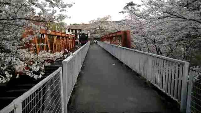 不止东京,小众赏樱好去处名古屋