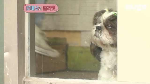 狗版罗密欧朱丽叶:每天隔着门约会