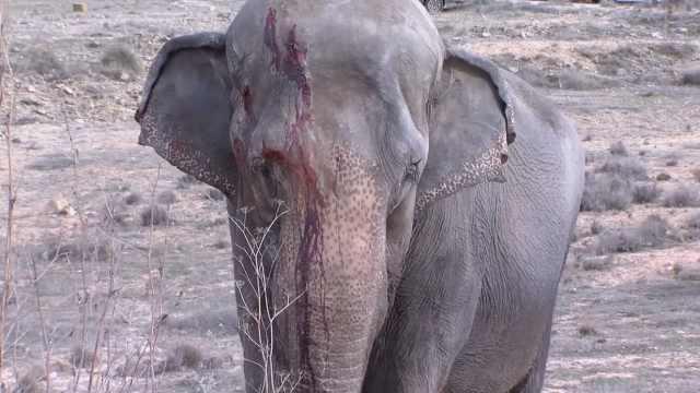 西班牙马戏团卡车车祸,大象1死4伤