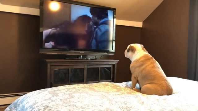 狗狗看恐怖片,超级入戏还大叫