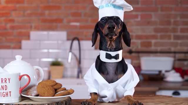 狗狗做的晚餐,你敢吃吗?