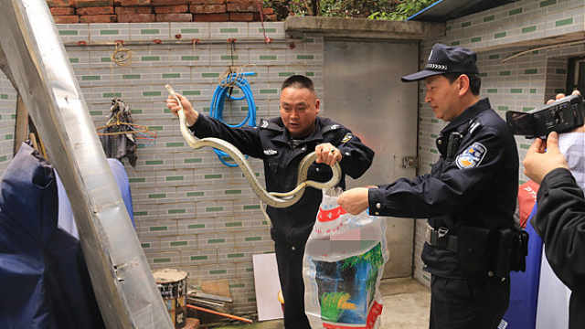 2米长大蛇闯进家中,女子束手无策