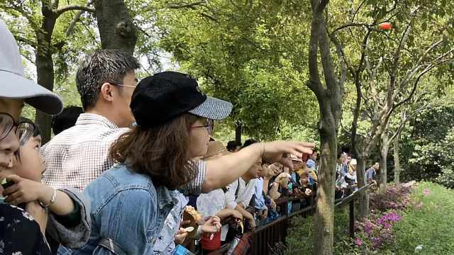 无语!游客围观黑熊,无视警示乱投食