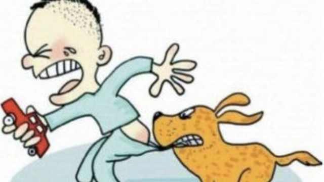 流浪狗又伤人!3岁男童被咬缝百针