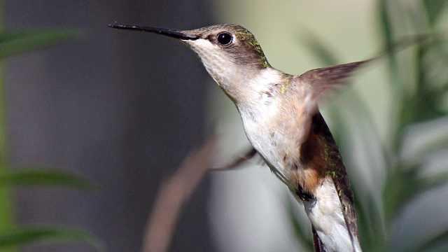 没有牙齿的鸟类如何吃东西?