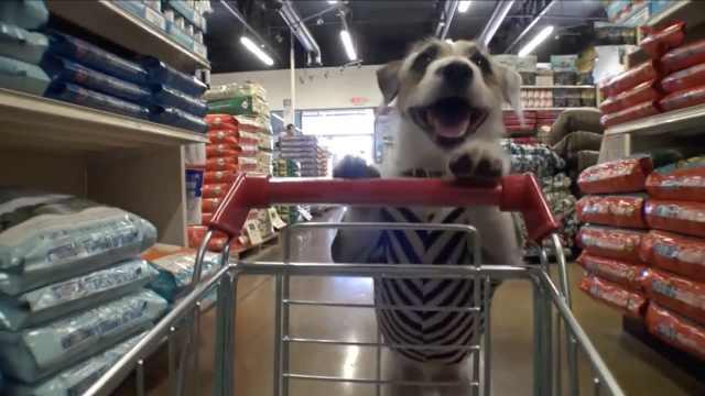 活久见!狗狗推购物车买东西