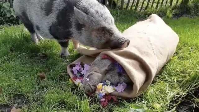 13年好友去世,小猪闭眼祈祷告别
