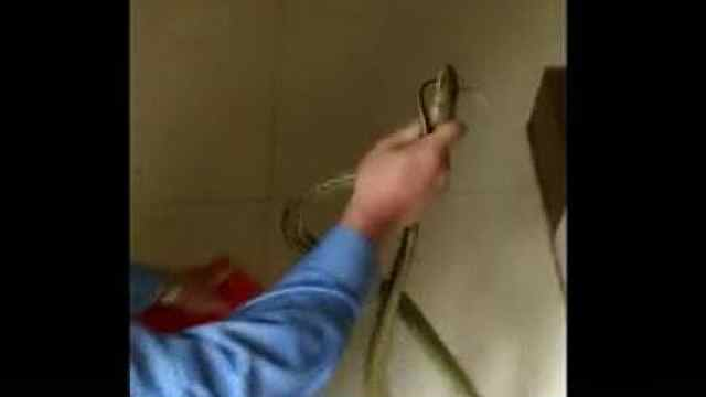 2米长大蛇溜进银行后台把人全吓跑
