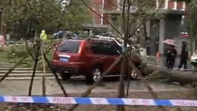 风雨中大树倒下砸学生,致1死3伤