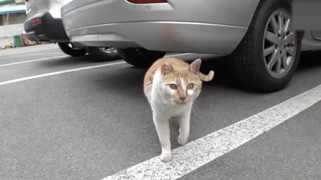 暖哭!黑猫背部重伤,橘猫不离不弃