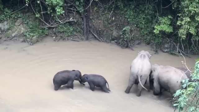 共享澡堂!36头亚洲象河中集体搓澡