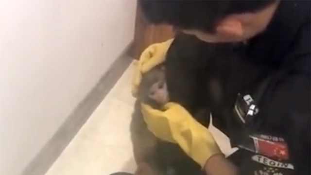 猴哥大闹居民区,民警用香蕉收服