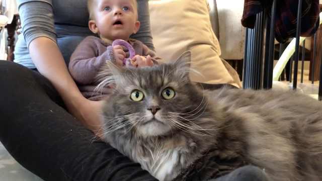 猫咪和小宝宝争宠记:我也要抱抱