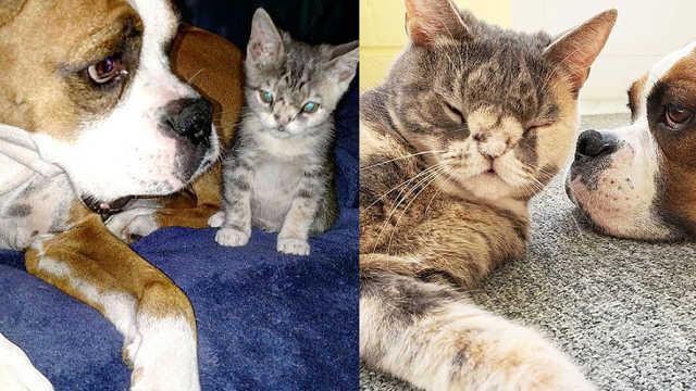 流浪小猫被收养,和狗狗组成姐妹花