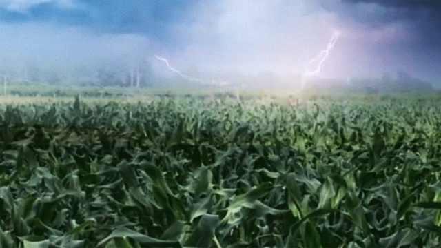 冰雹来啦,玉米快跑!