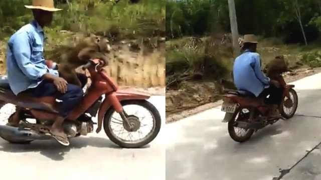 惊呆了!猴子竟然骑摩托车载着主人