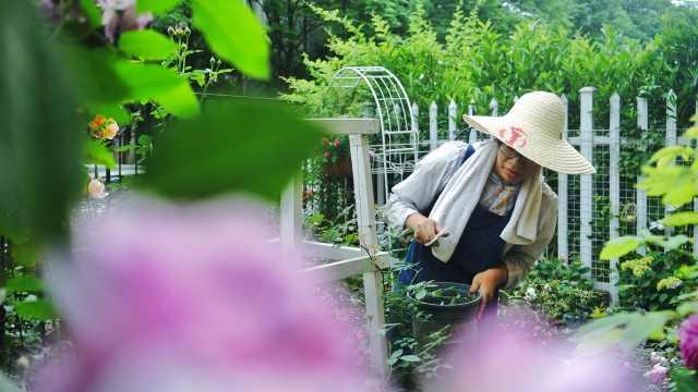 女白领爆改出租屋,打造私家花园
