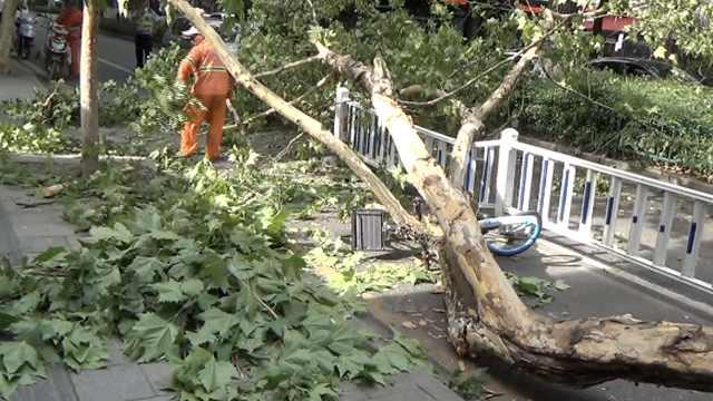 小伙高考失利出门散心,被树砸骨折