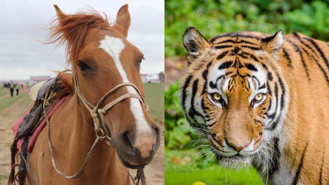 动物的眼睛长在前面和侧面的区别