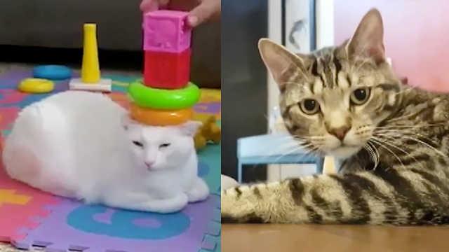 猫咪如此古怪又蠢萌,怎能不爱呢?