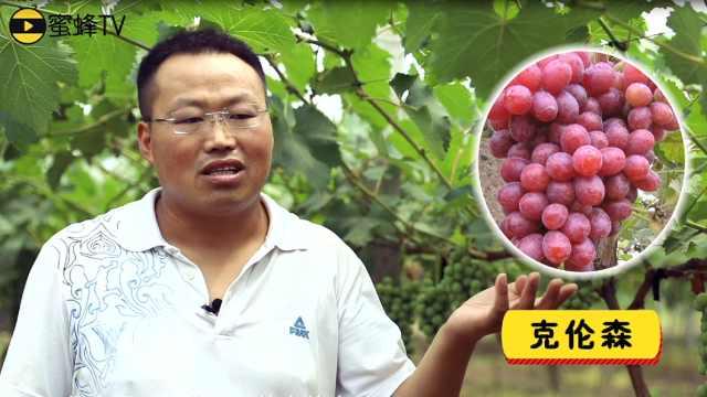 最适销好卖的葡萄品种,有哪些?