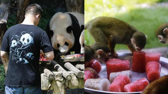 动物们如何避暑?每天吃800斤西瓜