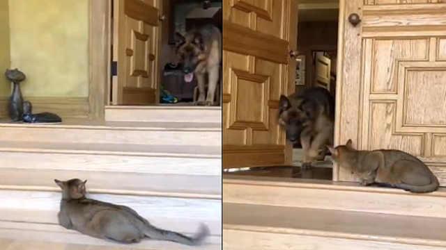 猫咪来守门,严厉到狗狗都害怕