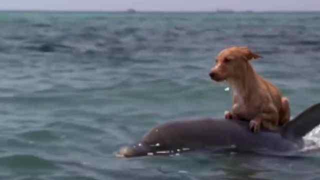 你知道海豚为什么会救人吗?