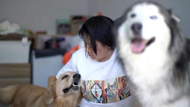 她北漂全职养狗,家人:脑子坏了?