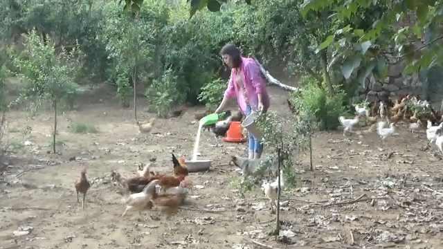 80后美女归隐田园,辞职返乡养8千鸡