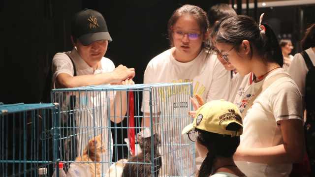 女孩遇死亡流浪猫:有人虐猫,心寒