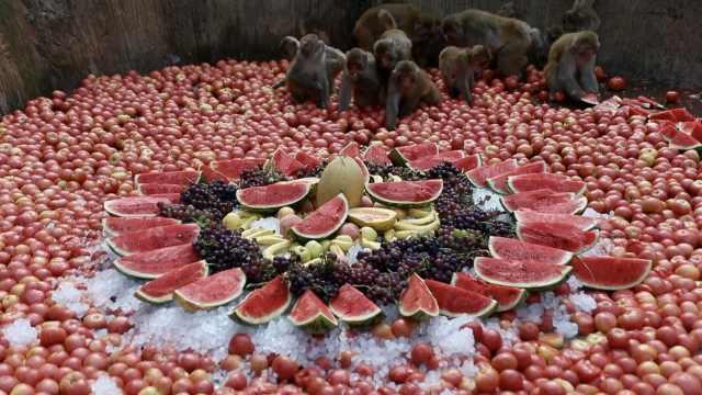 千只猴哥吃瓜,哈喇子直流爽到颤抖