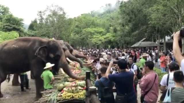 大象排队吃自助,萌娃大叔当服务生