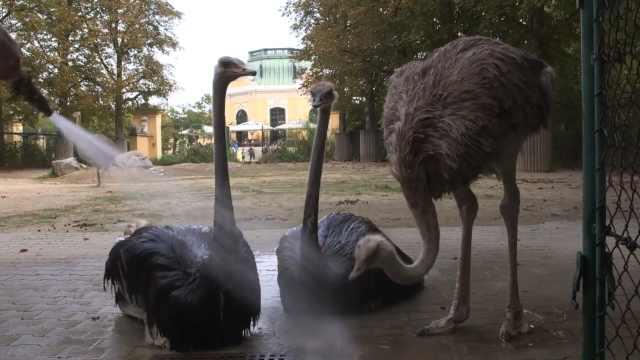 为给动物们降温,饲养员们使出妙招