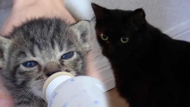网友家收养新猫咪,