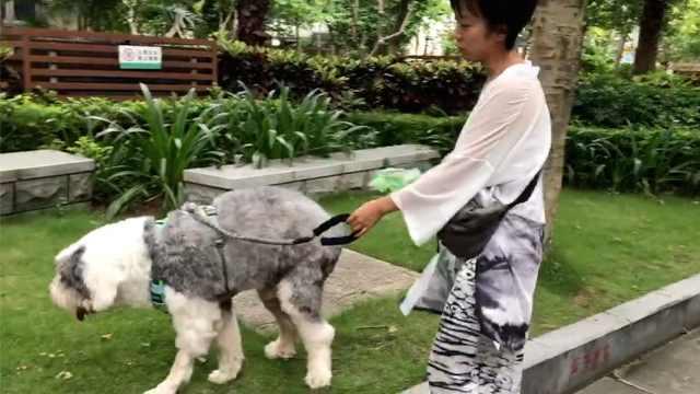 小区霸气公约:巡逻制止无绳遛狗