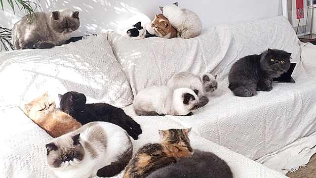 他租别墅养25只猫,花30万改造空间