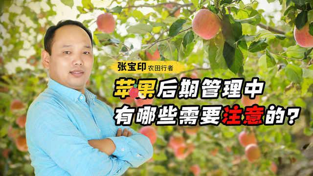 种植苹果后期如何管理才能连年丰产