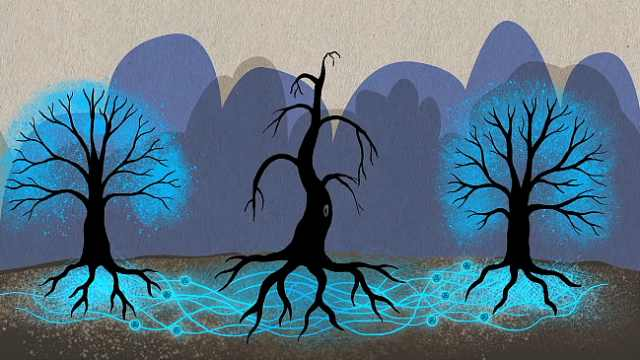 """奇妙!树木连上""""树维网""""进行交流"""