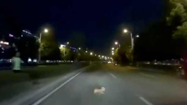 小狗未拴绳穿马路被撞死,狗主全责